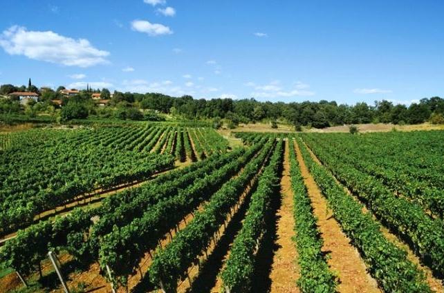 Obavijest poljoprivrednim proizvođačima – županijske potpore u 2020. godini