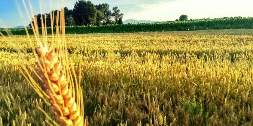 OBAVIJEST – Podnošenje zahtjeva za podršku po modelu ruralnog razvoja